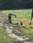 bike dogs